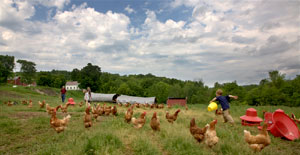 Children feeding chickens on a farm