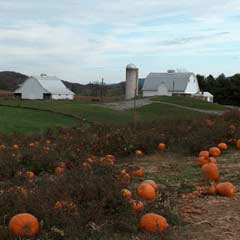 Pumpkin Festival at Sinkland Farms