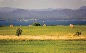 Hay fields on lake champlain