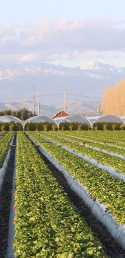 Hoop houses and vegetable farm in California